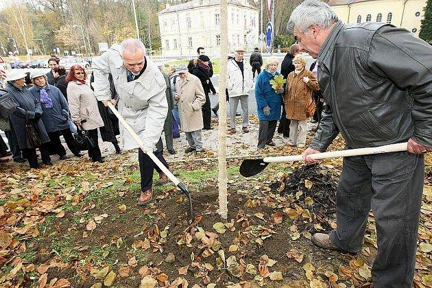 Vysazení nového stromu je každoroční součástí oslav státního svátku 28. října.