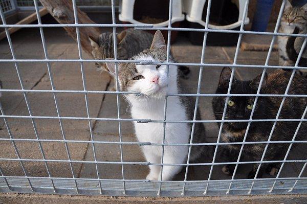 Irena Novotná založila vHolubicích Kočičí oázu. Chová vní dvě stě sedmdesát koček a jedenáct psů.