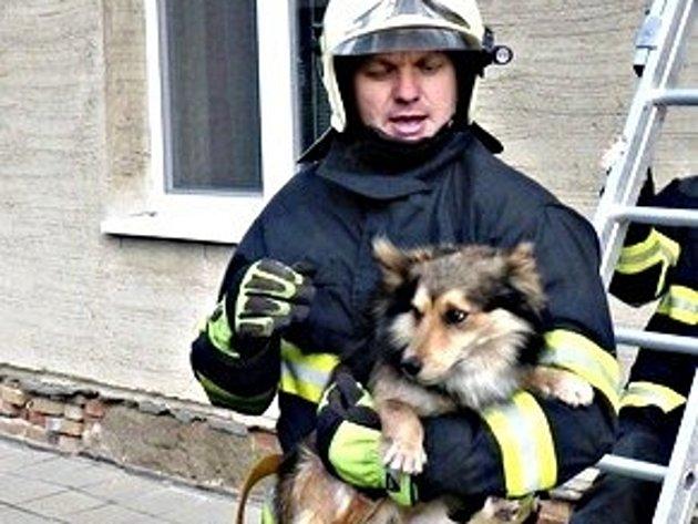 Hasiči vyprošťovali psa, kterému uvízla tlapa v okapu.