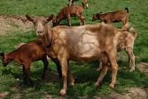 Jarošovi provozují ve Vážanech nad Litavou kozí farmu. Vládní opatření jim značně zkomplikovala prodej jejich produktů.