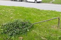 Mladé stromky lípy rozlámal neznámý vandal. Případem se zabývají policisté.