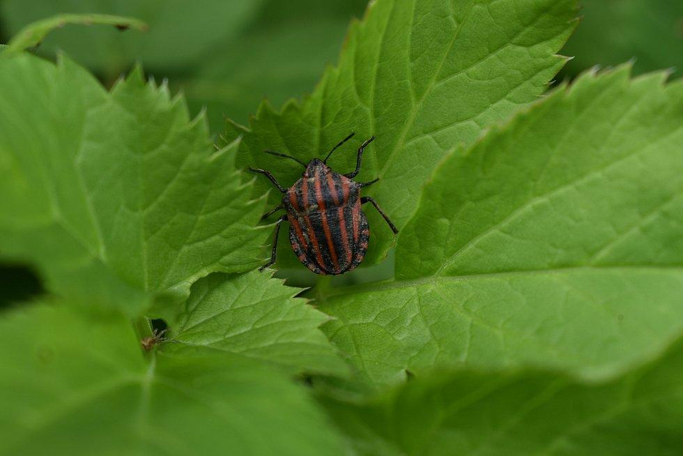 Hmyzí život na zahradě v Letonicích je příjemné i poučné pozorovat.