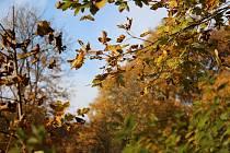 Ilustrační foto: V Komořanech oslaví podzim