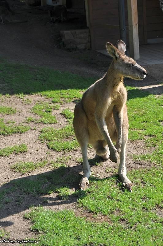 Více než šest set osmdesát druhů zvířat mohou návštěvníci v těchto dnech pozorovat v Zoo Praha.