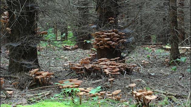 Září bylo na houby poměrně bohaté a příjemné počasí lákalo houbaře do lesů.