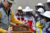 Příprava na soutěž Zlatá včela.