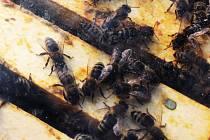 Vyškovský zoopark poprvé nabízí i možnost chovat své vlastní včely.
