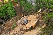 Kvůli plánované rekonstrukci prostoru před vlakovým nádražím ve Vyškově šlo k zemi několik vzrostlých stromů.