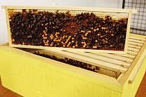 Výstava v Muzeu Vyškovska přibližuje historii včelařství, život včel a seznamuje i s vyškovským včelařským spolkem.