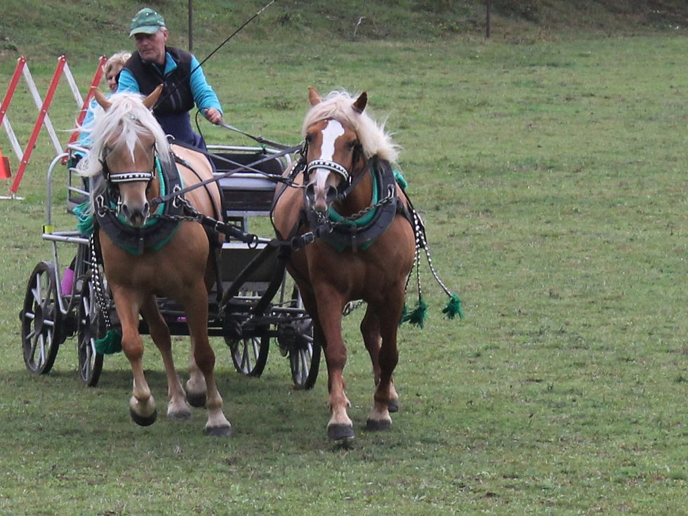 Na prvním ročníku Vozatajských závodů v Lovčičkách závodili koně v různých disciplínách.