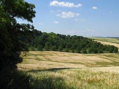 Zbytky stepi se zachovaly v lokalitě Visengrunty u Bošovic na Vyškovsku. Žijí tam vzácné druhy rostlin a živočichů, které milují sucho a světlo.