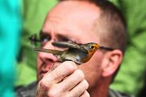 Kroužkování umožní identifikaci každého ptačího jedince po celou dobu jeho života. U rousínovského Kroužku jich ornitologové nakonec odchytli třiasedmdesát.