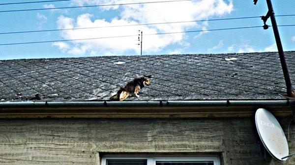 Hasiči vyprošťovali psa, kterému uvízla tlapa vokapu.