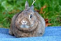 Návštěvníci mířili uplynulý pátek a sobotu do chovatelského areálu u vyškovského ádraží, kde se konala okresní výstava králíků, drůbeže a holubů.