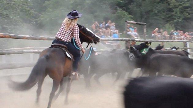 Moravské rodeo v Bohdalicích: kovboje překvapila třísetkilová telata