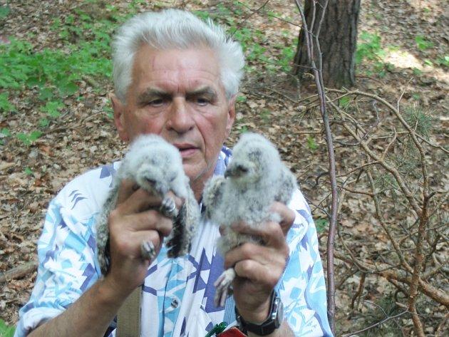 Kroužkování sov v lese u Vítovic.