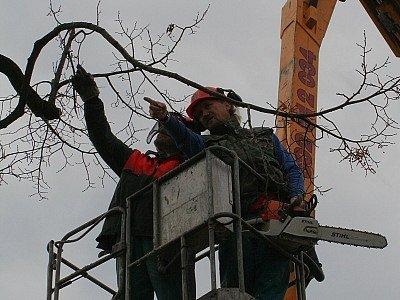 Řada starých stromů ve Vyškově potřebuje prořezat.