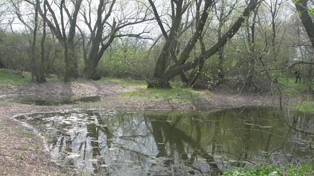 Drnovická bažina Žumpy.