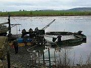 Desítky metráků uhynulých ryb vylovili během pátečního dopoledne pohořeličtí rybáři ze svého násadového rybníka v Ivanovicích na Hané.