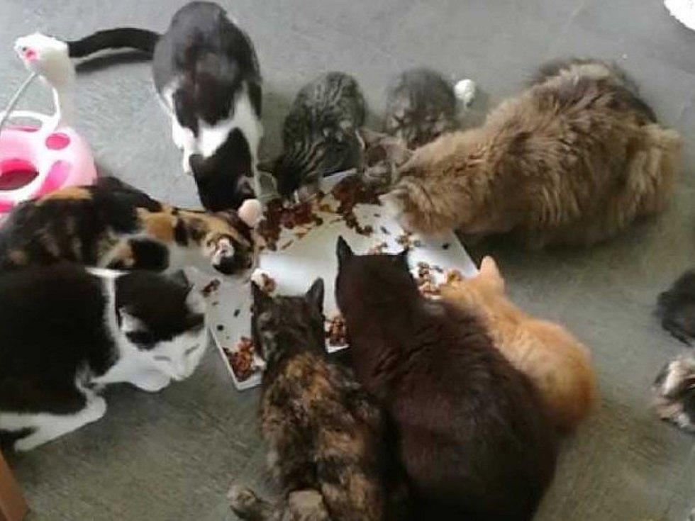 Renata Látalová provozuje ve Vyškově kočičí azyl. Kočky, kterým poskytuje domov, prý umí být neskutečně vděčné.