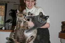První kočku dostala Lenka Kučerová z Lulče jako svatební dar. Takřka hned se poohlížela po dalších.