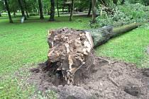 Uhnilé kořeny jsou nebezpečím pro kolemjdoucí. Strom, který je zelený a působí zdravě, totiž může nečekaně spadnout.
