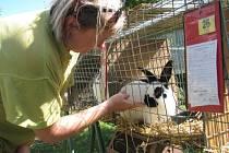 Bučovická zámecká zahrada je plná králíků, holubů a drůbeže.