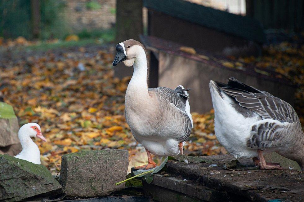 Vyškovská zoo je pro návštěvníky znovu uzavřená.