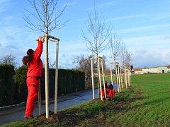 Vyškovská radnice letos nechala vysázet stromy nejen v ulicích města, ale například i ve Smetanových sadech.