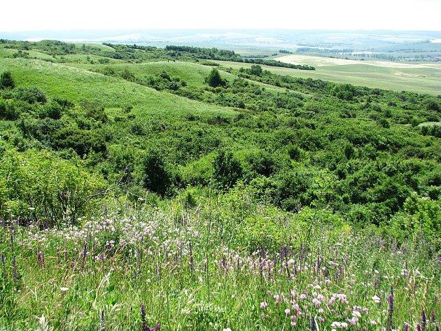 Národní přírodní rezervace Větrníky vznikla v roce 1951. Vyskytují se zde desítky chráněných druhů teplomilných rostlin a hmyzu.