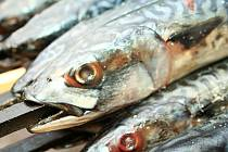 Milovníci opékaných makrel nebo specialit z kotle znovu neodolali tradičnímu setkání u kozlanského rybníku.