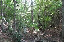 Okolo hamlíkovského potoka se v náročném terénu rozkládala osada Hamlíkov.