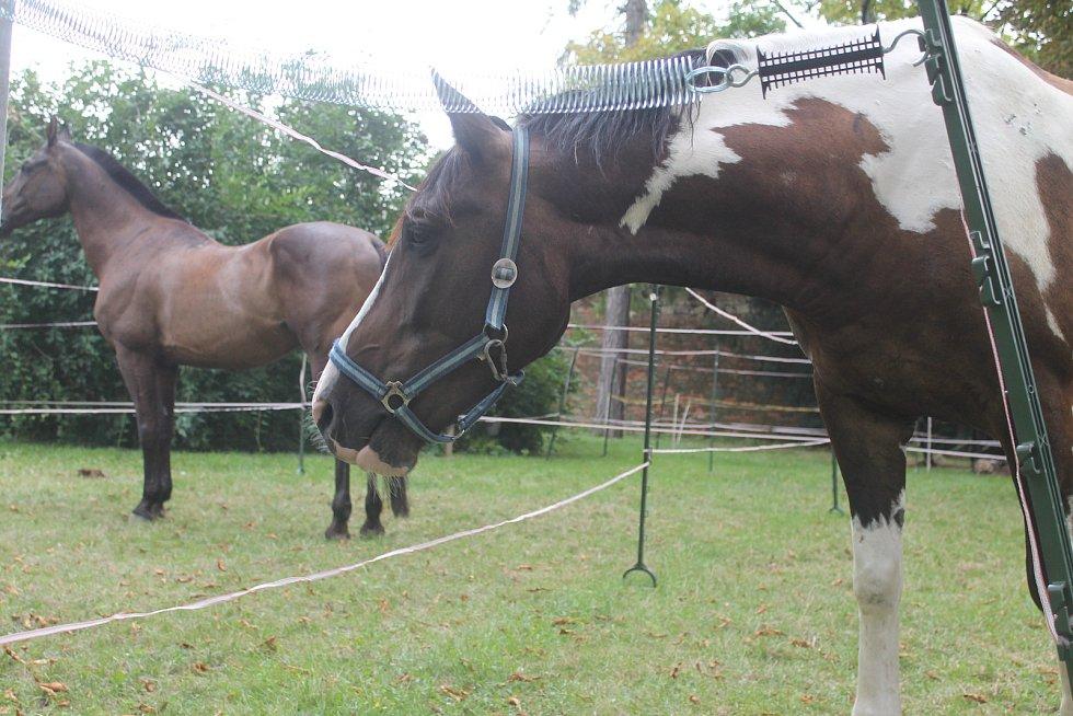 Den byl pro koně velice náročný.
