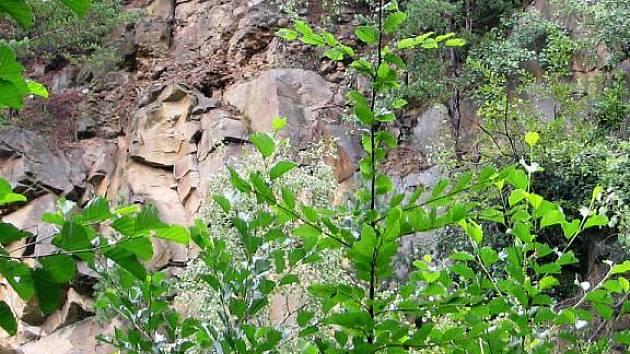 V lese nedaleko Habrovan se nachází přírodní památka Panská skála s tůňkami, jež využívají k rozmnožování vzácní obojživelníci. Jak je vidět ze snímku, býval to kdysi lom. Dnes tam dělníky nahradili žáby a čolci.