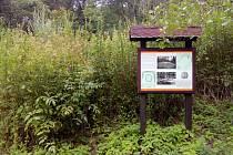 Zaniklá středověká vesnice ve Ždánickém lese Konůvky je úplně zarostlá kopřivami a další vegetací, obrysy chat nejsou vidět.