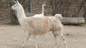 První návštěvníci od prosincového vynuceného uzavření v pondělí prošli bránou zooparku ve Vyškově.