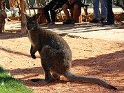 Nově otevřený pavilon Austrálie ve vyškovském zooparku.