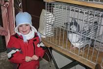 Výstava králíků a holubů na vyškovském nádraží