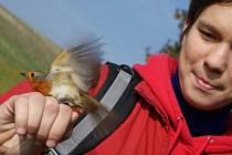 Na myslivecké chatě u Kroužku lákají na kroužkování ptáků.