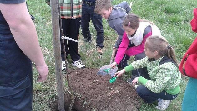 V Hruškách organizovali výsadbu stromů už vícekrát. Do akcí se v minulosti zapojovaly i děti.