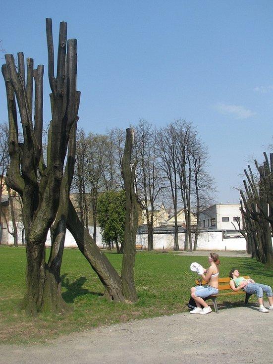 Odborný zásah nebo likvidace stromů?