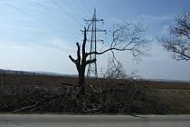 Prořezu stromů u Švábenic