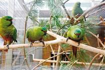Pro papoušky si do Bošovic přijeli zástupci pražské zoo.