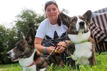 Mezinárodní klubová výstava psů plemena welsh corgi přilákala do Slavkova u Brna desítky chovatelů.
