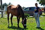 Nervové onemocnění rhinopneumonie způsobené herpesvirem letos ohrožuje také životy koní na jihu Moravy. Pomocí je pro ně také vakcína, kterou vyrábí firma z Ivanovic na Hané na Vyškovsku. Ilustrační foto.
