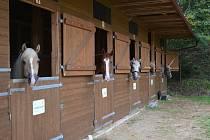 Na účastníky letních pobytů pod patronací vyškovské Piafy čeká například fyzioterapie nebo hipoterapie.