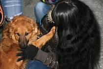 Psi ze záchytné stanice dostanou jídlo a hračky.