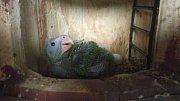 Začátkem června se v bošovické zoo vylíhlo mládě papouška amazoňana.