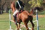 Lidé odměňují jezdce i jejich koně uznalým potleskem.