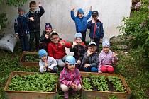 Pěstování zeleniny a kytiček v MŠ Hvězdlice.